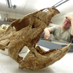 Archaeoceratops Lateral with Andy Farke in it's jaws