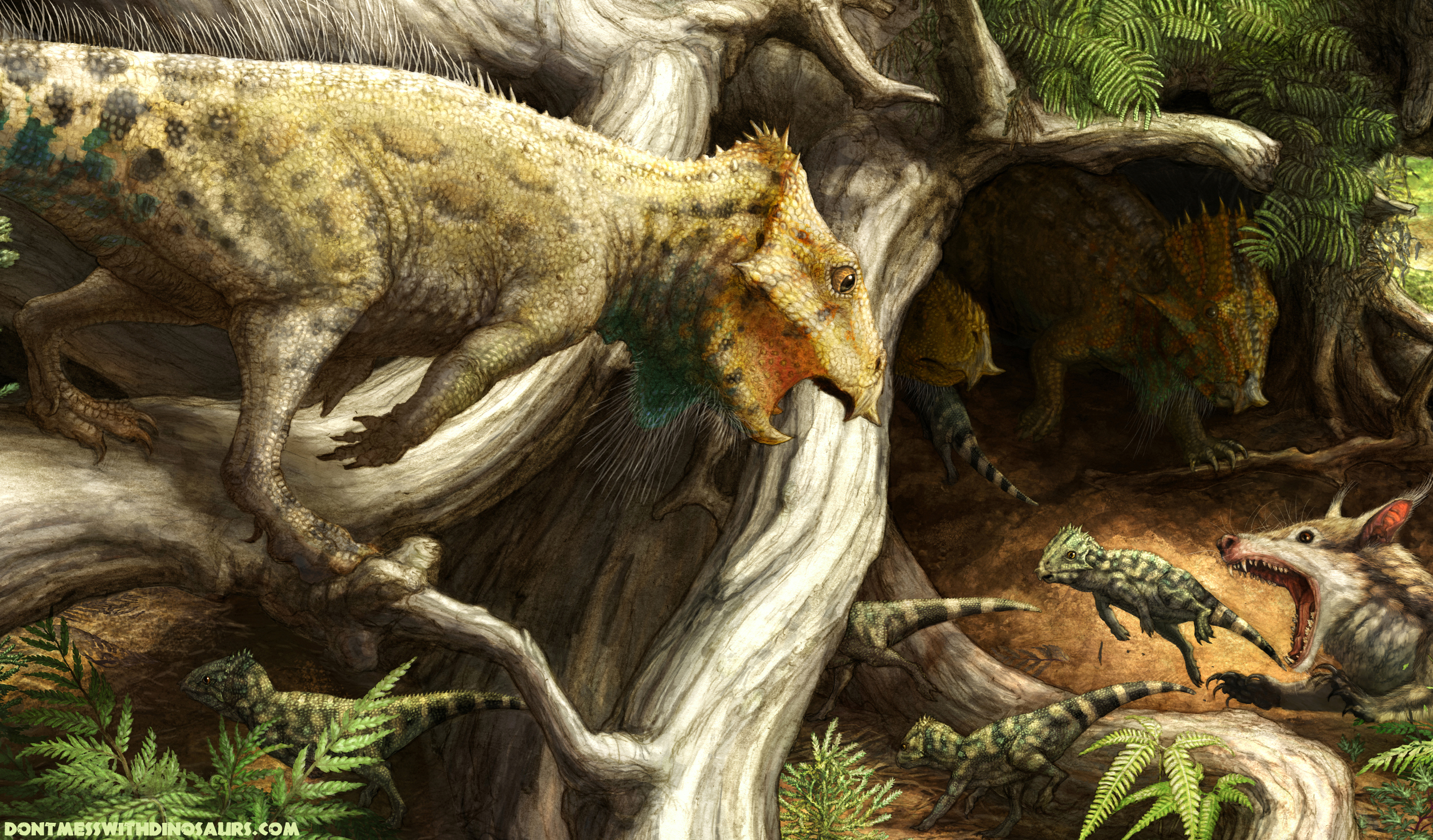 dontmesswithdinosaurscom 187 introducing aquilops americanus